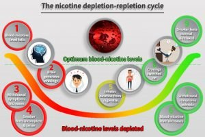 Nicotine cycle